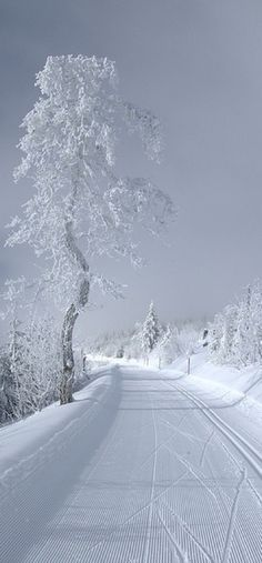 Cross country skiing in Rüschegg, Switzerland • photo: Vanil-Noir on Flickr