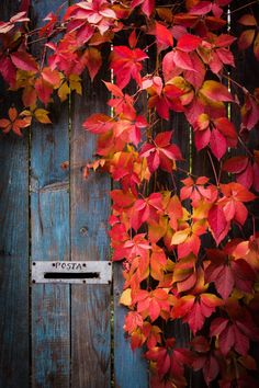 Message from Autumn - Limited Edition 1 of 5 Photography by Andrei Dragomirescu Autumn Day, Autumn Leaves, Pumpkin Leaves, Autumn Nature, Autumn Scenery, Autumn Aesthetic, Autumn Photography, Color Photography, Digital Photography