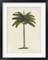 Framed British Palms IV