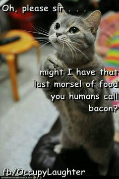 Even cats love bacon! ;)