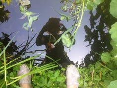 #synchroonkijken 2015 -dag 7 #from where I stand....mijn tuinvijvertje en de kikkers kijken terug