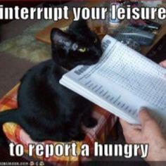Yep! Silly cats!