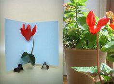 cyclamen vs cyclamen, flower pop up, by Rosa Yoo