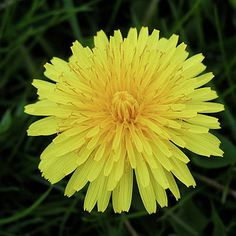 13 Weeds You Can Eat Without Dying | Maybe I'll start foraging...