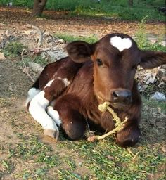 Funny pictures about Love Cow. Oh, and cool pics about Love Cow. Also, Love Cow photos. Cute Little Animals, Unique Animals, Cute Funny Animals, Animals And Pets, Wild Animals, Happy Animals, Cute Baby Cow, Baby Cows, Cute Cows
