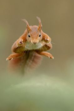 Fly little squirrel, fly!!!!!!