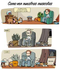 Cómo ven nuestras mascotas