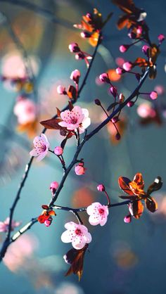 Ideas spring nature photography ideas cherry blossoms for 2019 Beautiful Flowers Wallpapers, Beautiful Nature Wallpaper, Pretty Wallpapers, Pretty Flowers, Pink Flowers, Paper Flowers, Flor Iphone Wallpaper, Spring Nature, Flower Aesthetic