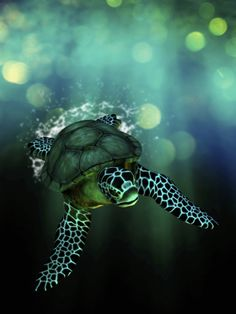 ^Green Sea Turtle Swimming in the Ocean by Victor Habbick.