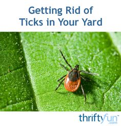 This is a guide about getting rid of ticks in your yard. Depending on where you live and the time of year ticks can be a parasite on dogs and humans. Food grade diatomaceous earth may be helpful in reducing ticks.