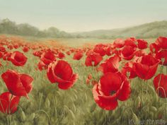 Igor Levashov - Field of Poppies