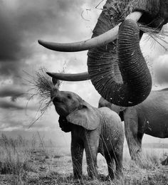 Photos That Prove Elephants Make The World A Better Place - 22 photos proving animal world better place