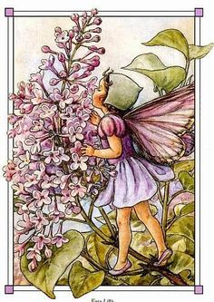 Cicely Mary Barker - The Lilac Fairy Garden Illustration, Fantasy Illustration, Illustration Girl, Cicely Mary Barker, Willow Flower, Flower Fairies Books, Wonderful Day, Fairy Pictures, Vintage Fairies