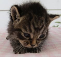 """A tiny kitten was delivered to an animal rescue group by an unlikely character in the early hours of one morning.Photo: Kitten InnTwo years ago, Kitten Inn, a rescue group in Lower Hutt, New Zealand, got a visitor at 3AM in the morning. """"I was awoken by someone knocking on my door. I quickly got ..."""