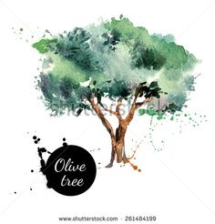 Olive tree vector illustration. Hand drawn watercolor painting on white background - stock vector