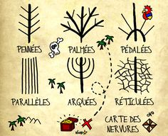 Les nervures des feuilles, Sauvages du Poitou
