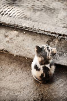 Kitten - null