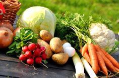 Vegetable Gardening for Beginners — Expert Advice - Organic Gardening - MOTHER EARTH NEWS