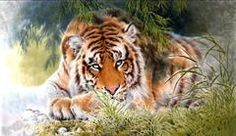 "арт.19467 ""Тигр на отдыхе"" [30*60] Алмазная мозаика"