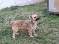 PERRIS, CA - FOUND: Breed: Unknown Breed Gender: Male Coloring: brown and grayish Microchip: N/A Ref #: 11076 Comments: In looking for the owners of this dog, my neighbors informed me he had been walking around the neighborhood for a couple of days. He is a puppy ave scared of leashes. Cross-post from Petkey. Please contact poster: http://petkey.org/pet-recovery/FoundPets.aspx