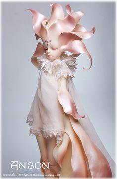 dollzone anson