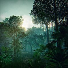 If you wander through the dense, tropical jungle, you can feel the warm, damp climate of rainforests.