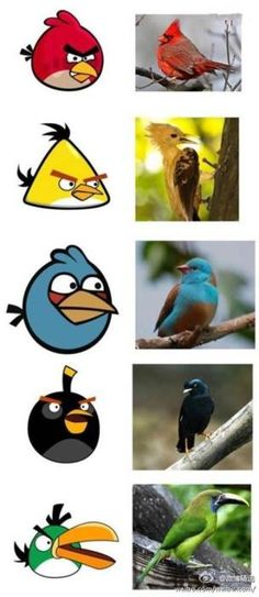 "Real AngryBirds something ""real"" to learn!"
