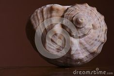 sea-shell-brown-background Snail, Sea Shells, Brown, Seashells, Brown Colors, Shells, Slug