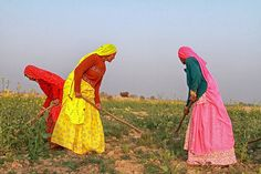 The ladies rise up from thier agricultural landscape like colorful flowers! Jaisalmer, Rajasthan, India, Dec.2011, by peo pea, via Flickr