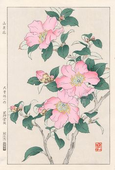 Rose by Yuichi Osuga from Shodo Kawarazaki Spring Flower Japanese Woodblock Prints Art And Illustration, Watercolor Illustration, Illustrations, Vintage Botanical Prints, Botanical Drawings, Botanical Art, Art Floral, Japanese Art Styles, Asian Flowers