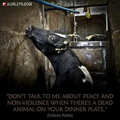 Sick of people preaching about animal rights- but excluding farm animals. My mom is always preaching animal rights and telling me story's of abused dogs yet she eats dead pigs , cows and chickens Going Vegetarian, Going Vegan, Sick Of People, Animal Agriculture, Factory Farming, Vegan Quotes, Why Vegan, Stop Animal Cruelty, Vegan Animals