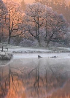winter's blush...
