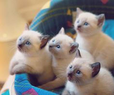 Dad sorry to say but I'll be bringing a new cat home if I had a chance to get one of these!!!!