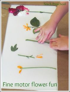 Fine motor flower fun by Teach Preschool. Dissect flowers with tweezers and other fun flower activities.