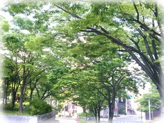 It's so fresh fine morning in kobe◎The trees seems to singing like 『We are the green~♪』☆Today is Children's day in Japan◎We wish children to be happy & smiling☆