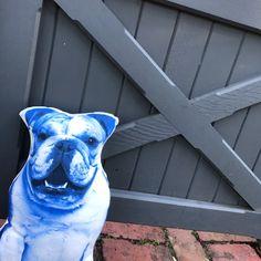 English Bulldog Blue Throw pillow Blue Throw Pillows, Kids Pillows, Decorative Cushions, Take Me Home, Soft Hands, Bulldogs, All The Colors, English, Gifts