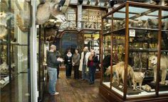 Gallery Talk in Natural History at National Museum of Ireland National Museum, Walking Tour, Natural History, Museums, Ireland, Group Tours, Lynx, Gallery, Nature