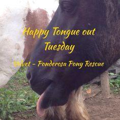 Velvet for #tongueouttuesday