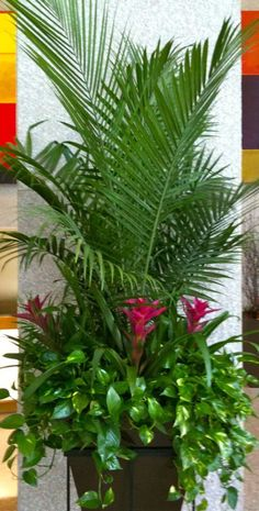 palms and bromeliads in planted raised basket