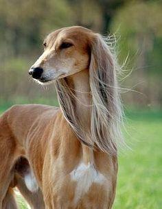 كلب هاديءس