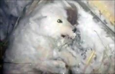 Sign the petition demanding justice for dog whose owner poured cold water over her in -32 degree weather, freezing her into a block of ice.
