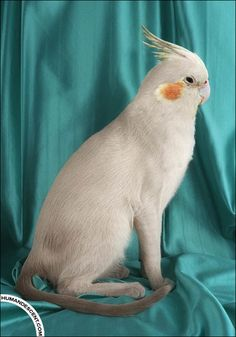 20 Wacky Animal Hybrid Photo Manipulation Artworks