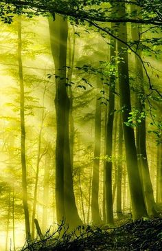 Sun Drenched Forest, Switzerland