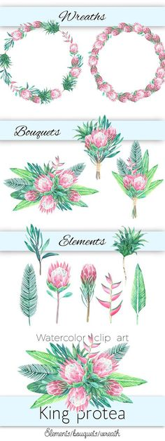 Use it for wedding, party, birthday and so on. Just enjoy :) --- This set includes: - 7 elements (PNG (appr. King Protea, Layout Inspiration, Watercolor Art, Olie, Clip Art, Tapestry, Graphic Design, Birthday, Pink