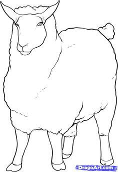 how to draw a sheep step 11