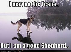 :) God created German Shepherds for his children on earth to keep them safe while he wathced over them from above.