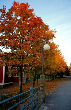 Crisp air and stunning colors make autumn so worth it! #finland #autumn
