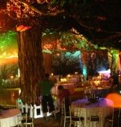 Enchanted Forest with Indoor Trees and Creatures of the Woodland