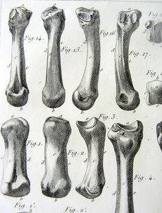 Anatomie humaine antique originale de 1831 par LyraNebulaPrints
