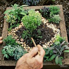 Make this miniature herb garden in under an hour with our step-by-step guide. Fill a wooden box or seed flat with soil and plant the herbs of your choice. Finish off with mini pebbles for decoration.